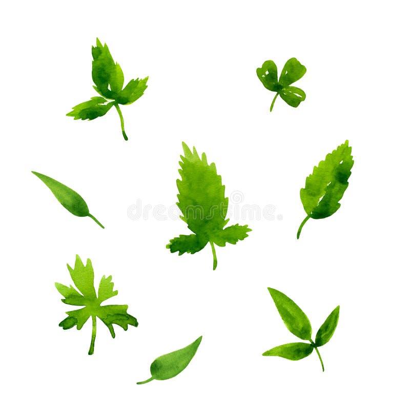 Reeks verschillende groene verse bladeren Waterverfhand getrokken illustratie Geïsoleerdj op witte achtergrond De grafische Eleme royalty-vrije illustratie