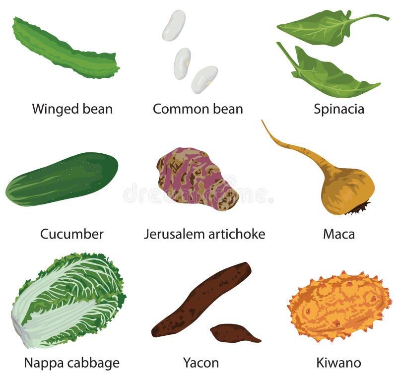 Reeks verschillende groenten royalty-vrije illustratie