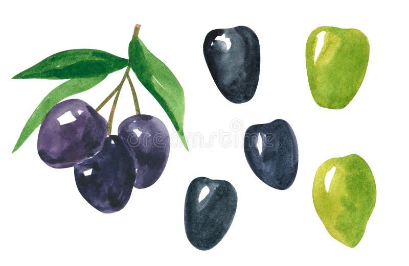 Reeks verschillende groenten, hand getrokken waterverfillustratie Zwarte en groene olijf met bladeren stock illustratie