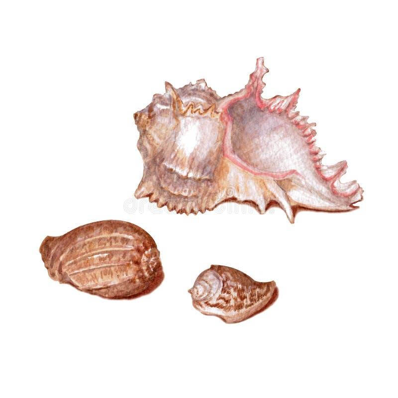 Reeks verschillende kleurrijke die zeeschelpen op een witte achtergrond wordt geïsoleerd Mooie waterverfillustratie op het marien royalty-vrije illustratie