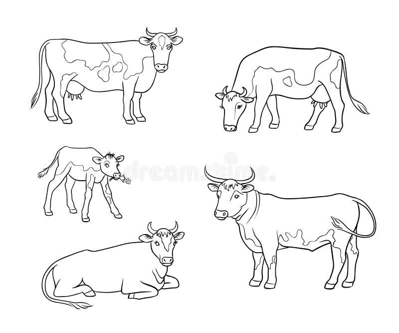 Reeks verschillende koeien in overzichten - vectorillustratie stock foto's