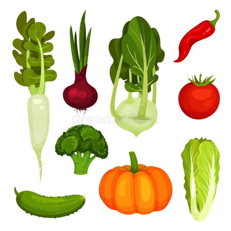 Reeks verschillende rijpe groenten Organische landbouwproducten Groenten: snijbonen, wortelen en bloemkolen Verse ingrediënten vo stock illustratie