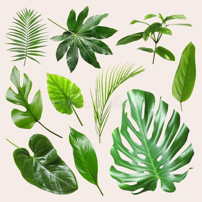 Reeks verschillende tropische bladeren royalty-vrije stock foto