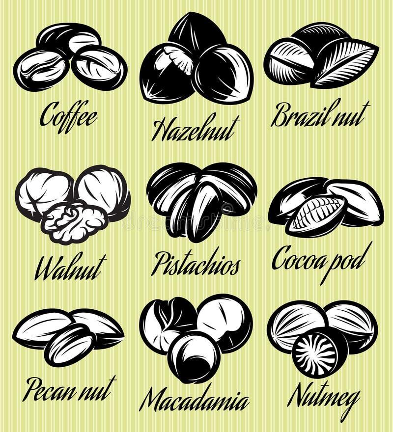 Reeks verschillende zaden van symbolenpatronen, noten, vruchten vector illustratie