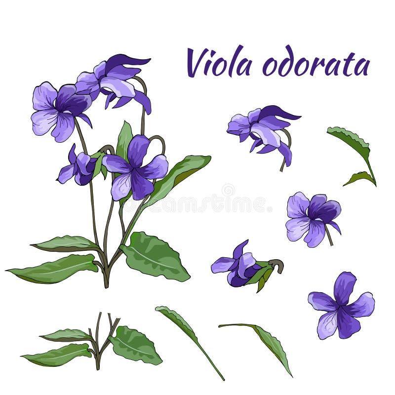 Reeks violette violette bloemen op een lichte achtergrond Bloemen hand-drawn ontwerpelement Voor behang, textielontwerp vector illustratie