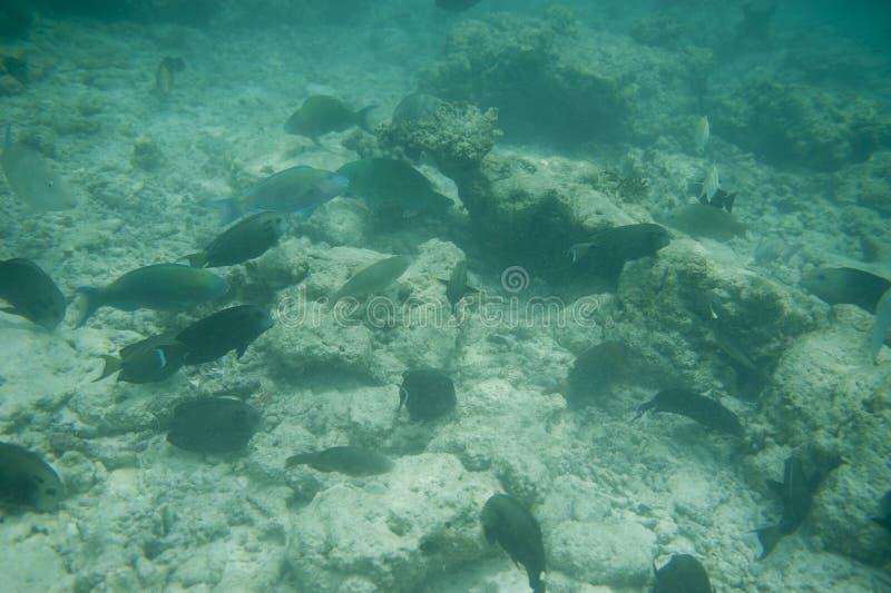 Reeks vissen stock foto's