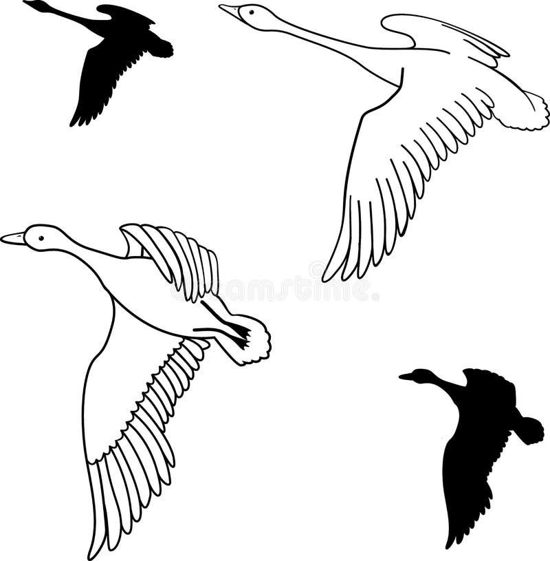Reeks vliegende wilde eenden Vector illustratie vector illustratie