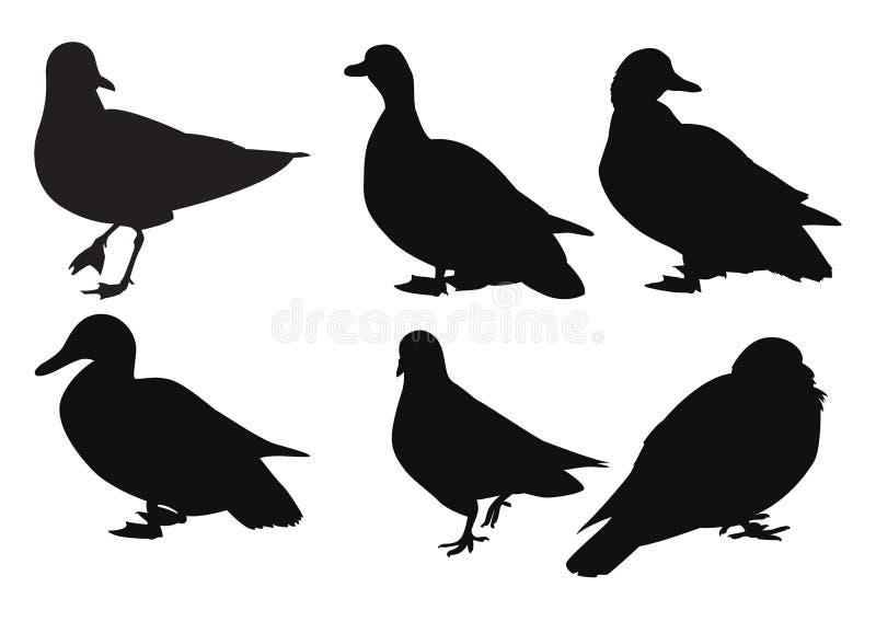 Reeks vogelsilhouetten stock illustratie