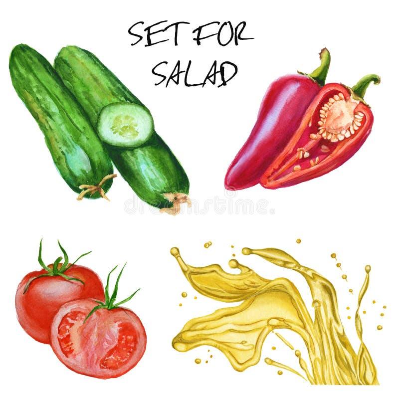 Reeks voor salade Komkommers, tomaten, peper en olijfolie Isolat stock illustratie