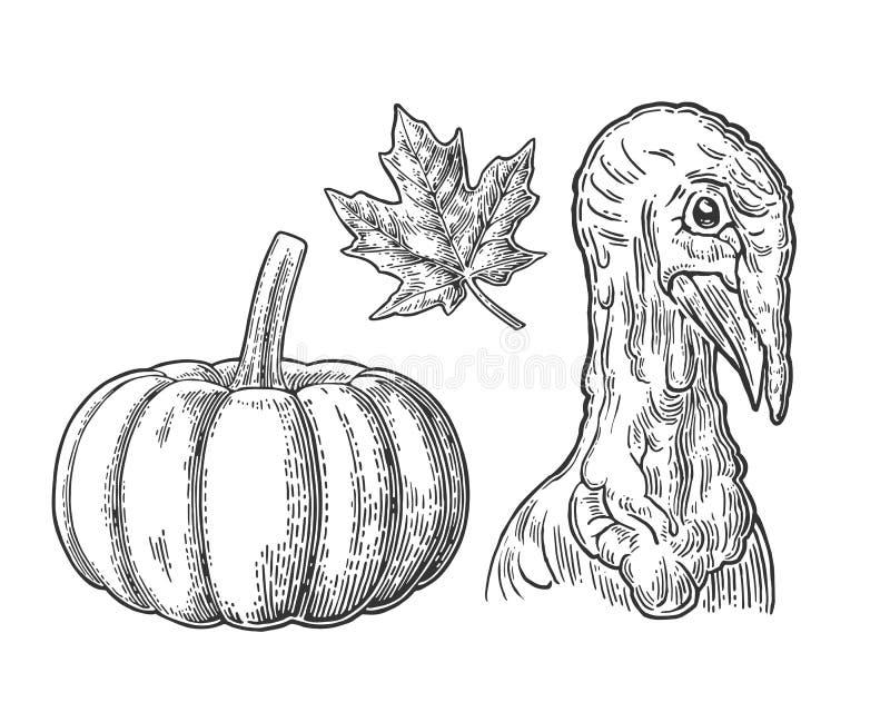 Reeks voor thanksgiving dayaffiche Esdoornblad, pompoen en hoofddieTurkije op witte achtergrond wordt geïsoleerd stock illustratie