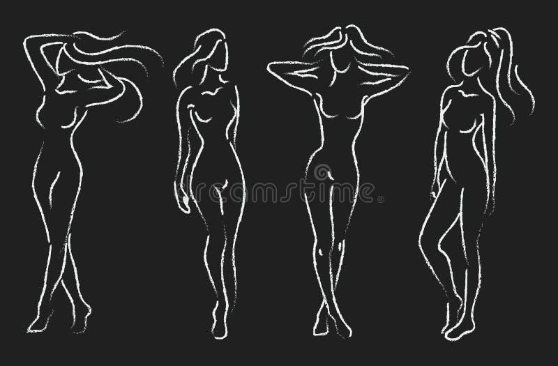 Reeks vrouwelijke cijfers Inzameling van overzichten van jonge meisjes Gestileerd slank lichaam Het trekken op een bord vector illustratie