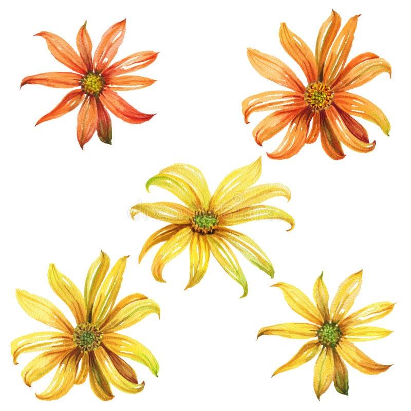 Reeks waterverf gele en oranje madeliefjes royalty-vrije illustratie