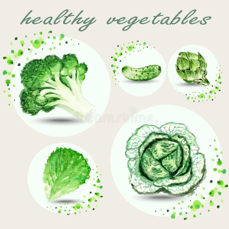 Reeks waterverf groene verse groenten royalty-vrije illustratie