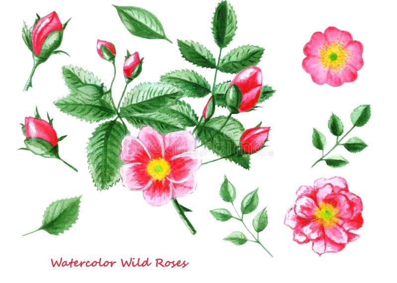 Reeks waterverfbloemen Hand getrokken nam wild bloem, bladeren en knoppen toe vector illustratie