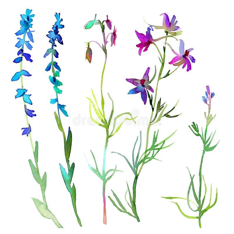 Reeks waterverfelementen Illustratie van tuin en wilde die bloemen en bladeren op witte achtergrond worden geïsoleerd royalty-vrije stock fotografie