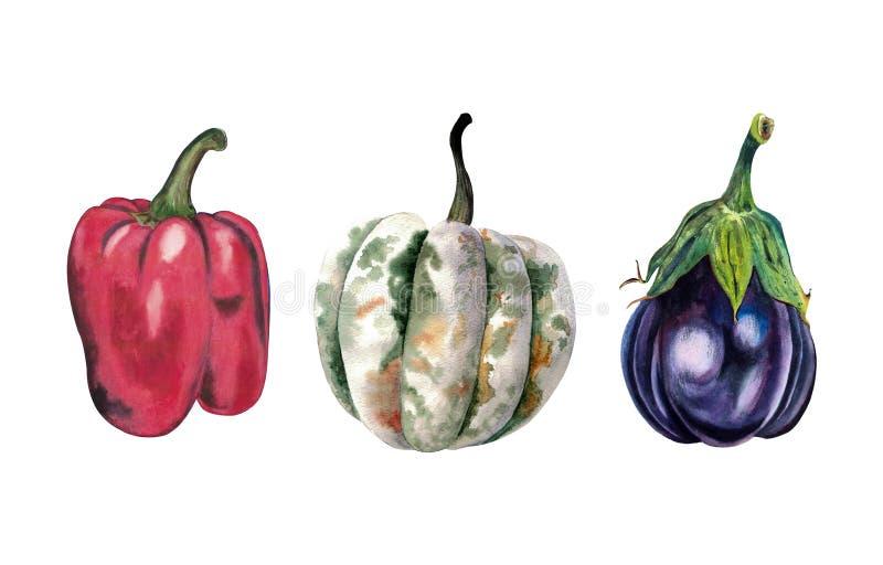Reeks waterverfgroenten: pompoen, peper, aubergine op witte achtergrond wordt geïsoleerd die vector illustratie