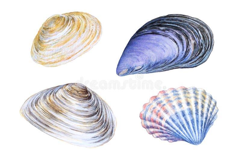 Reeks waterverfhand getrokken overzeese shells stock illustratie