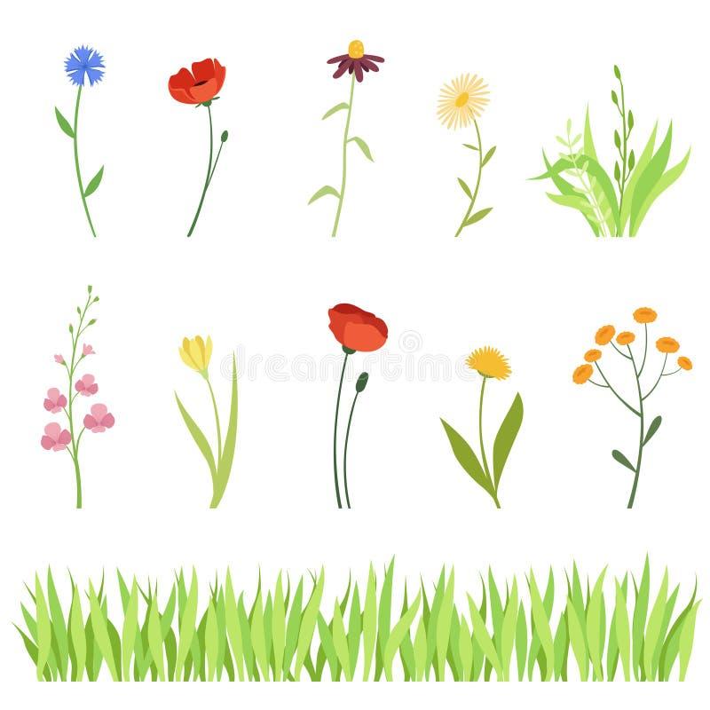 Reeks weide en tuinkruiden en bloemen en een horizontale achtergrond van gras royalty-vrije illustratie