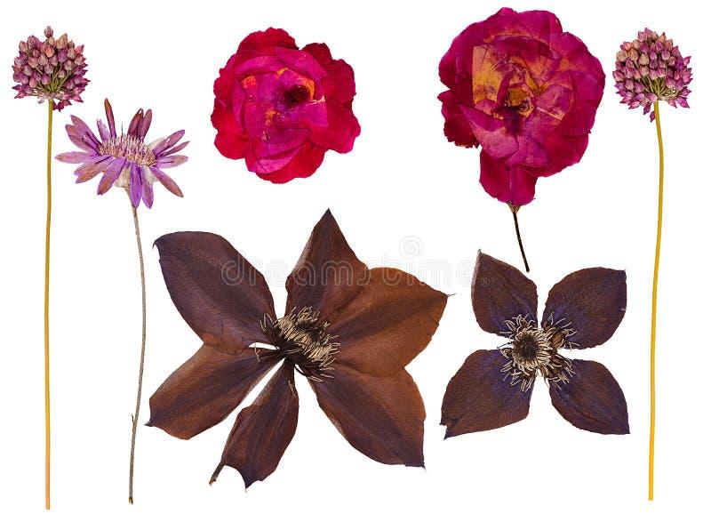 Reeks wilde droge gedrukte bloemen en bladeren royalty-vrije illustratie