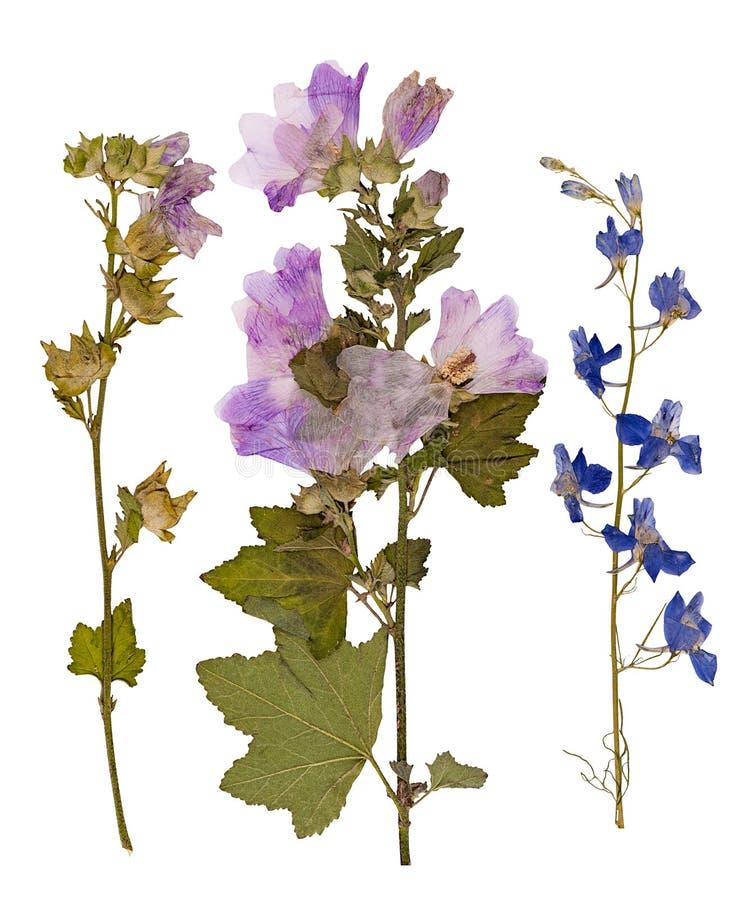 Reeks wilde droge gedrukte bloemen en bladeren stock illustratie