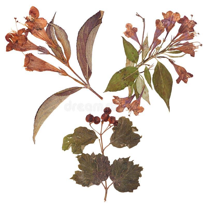 Reeks wilde droge gedrukte bloemen en bladeren royalty-vrije stock afbeeldingen