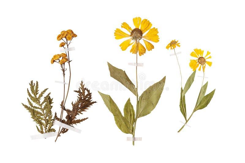 Reeks wilde droge gedrukte bloemen en bladeren royalty-vrije stock foto