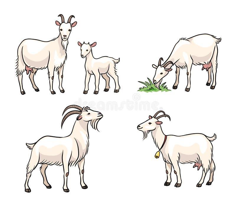 Reeks witte geiten - vectorillustratie stock afbeelding