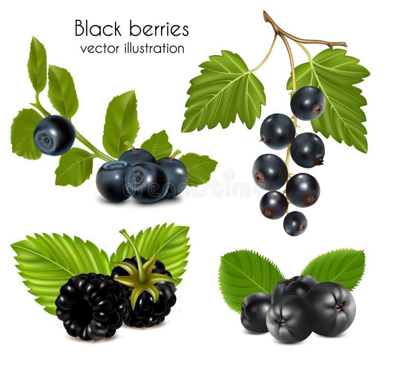 Reeks zwarte bessen met bladeren. royalty-vrije illustratie