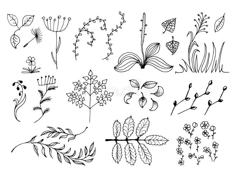 Reeks Zwarte Hand Getrokken Bloemenontwerpelementen die op Witte Achtergrond worden geïsoleerd royalty-vrije illustratie