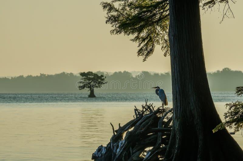 Reelfoot湖,田纳西国家公园 免版税库存照片