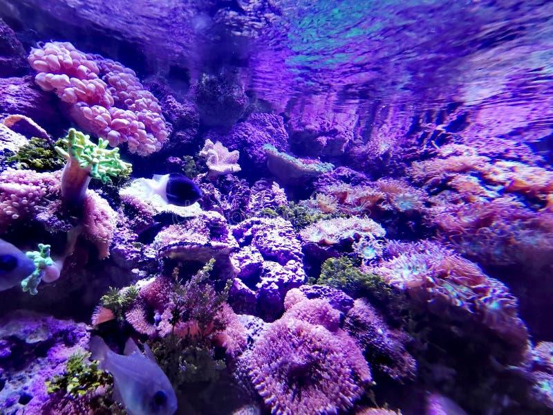 Ref Tank @ SEA LIFE Sydney Aquarium, Australië stock afbeeldingen