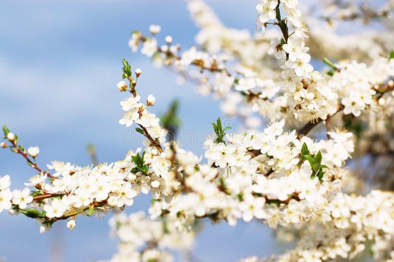 Refeição matinal da árvore de fruto na flor fotografia de stock