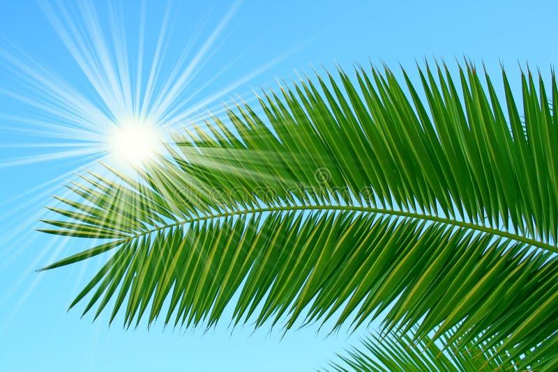 Refeição matinal da palma imagem de stock