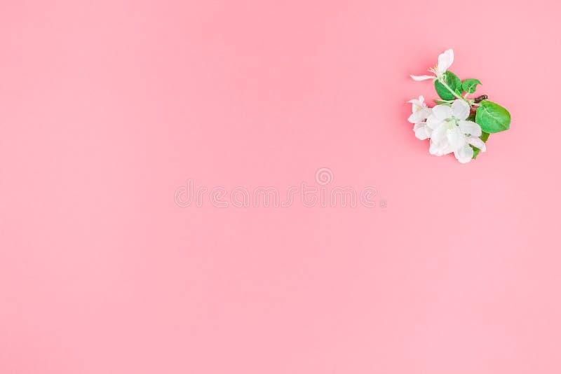 Refeição matinal de florescência branca da árvore de maçã da mola fotografia de stock
