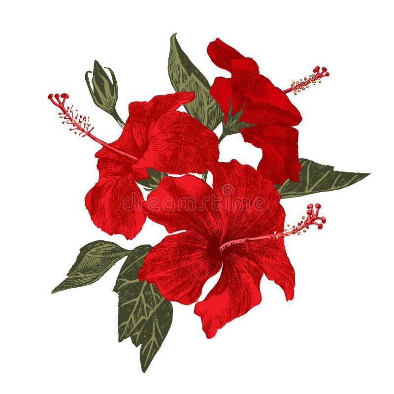 Refeição matinal tirada mão do hibiscus ilustração do vetor