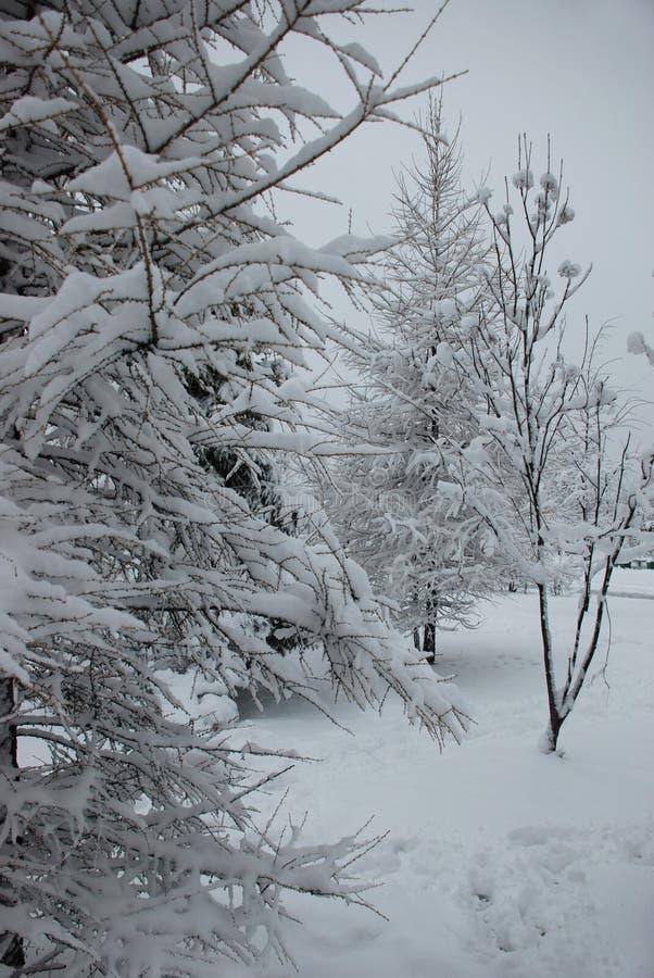 Refeições matinais da árvore cobertas com a camada grossa de neve no inverno fotos de stock