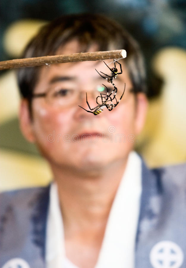 Download A Referee Watching Two Spiders Fight Editorial Stock Image - Image: 12913869