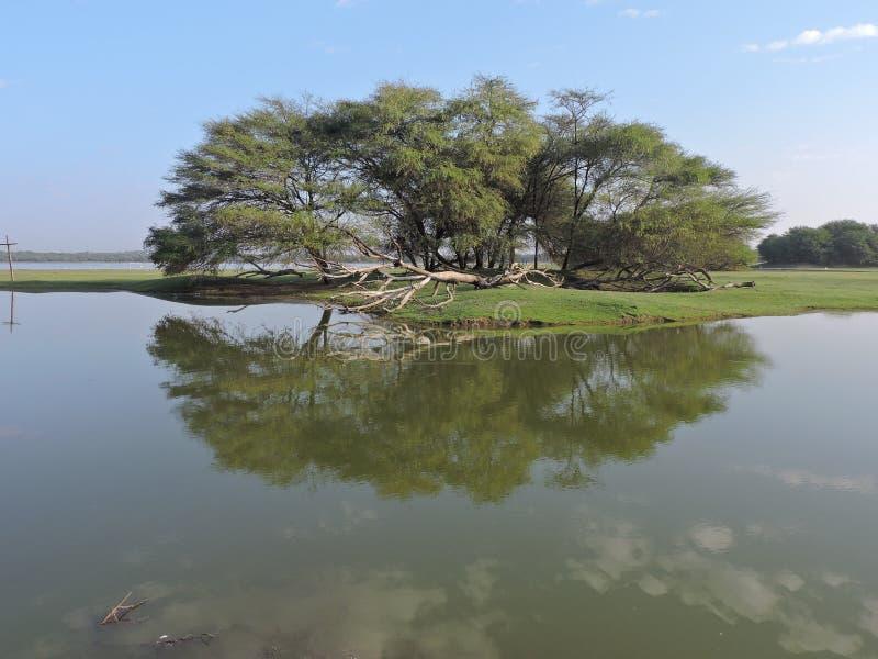 Reflaction in het water stock afbeeldingen