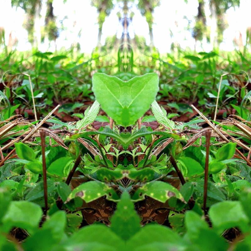 Reflect. Nature& x27;s beauty stock photo