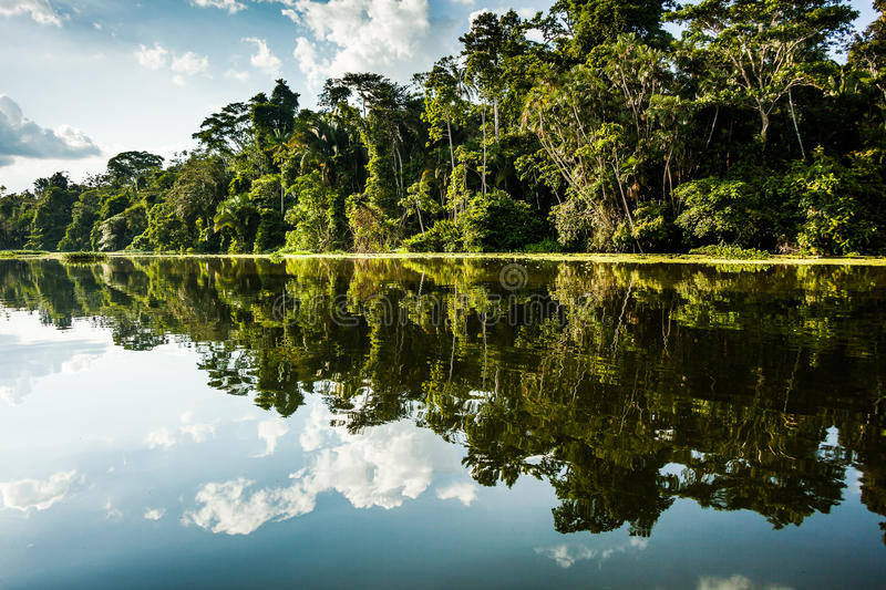 Reflected jungle. In the Limoncocha lagoon in the Ecuadorian Amazon royalty free stock photo