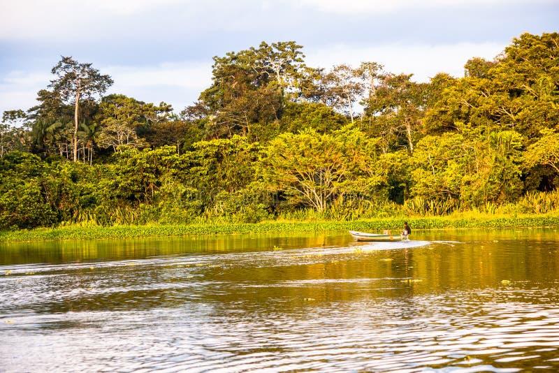 Reflected jungle. In the Limoncocha lagoon in the Ecuadorian Amazon royalty free stock photography