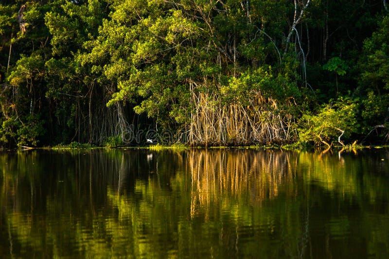 Reflected jungle. In the Limoncocha lagoon in the Ecuadorian Amazon stock photography