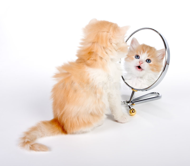 Reflected Kitten Royalty Free Stock Images