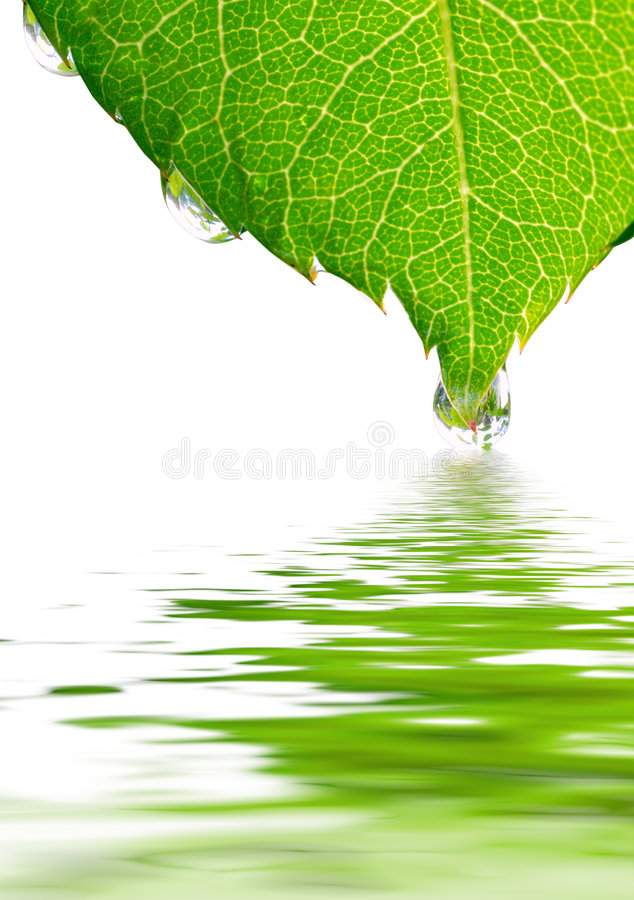 Reflected leaf royalty free stock photography