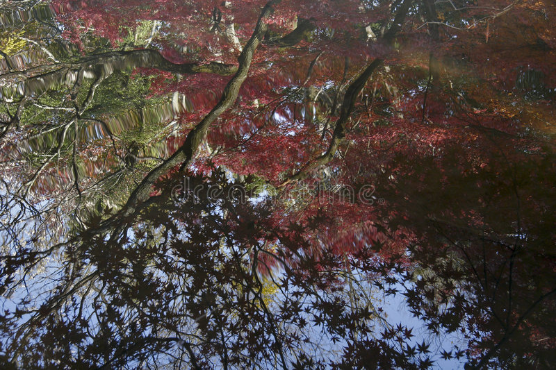 Reflected Leaves. Multi-colored leaves reflected on the surface of a pond in Kyoto, Japan stock photos
