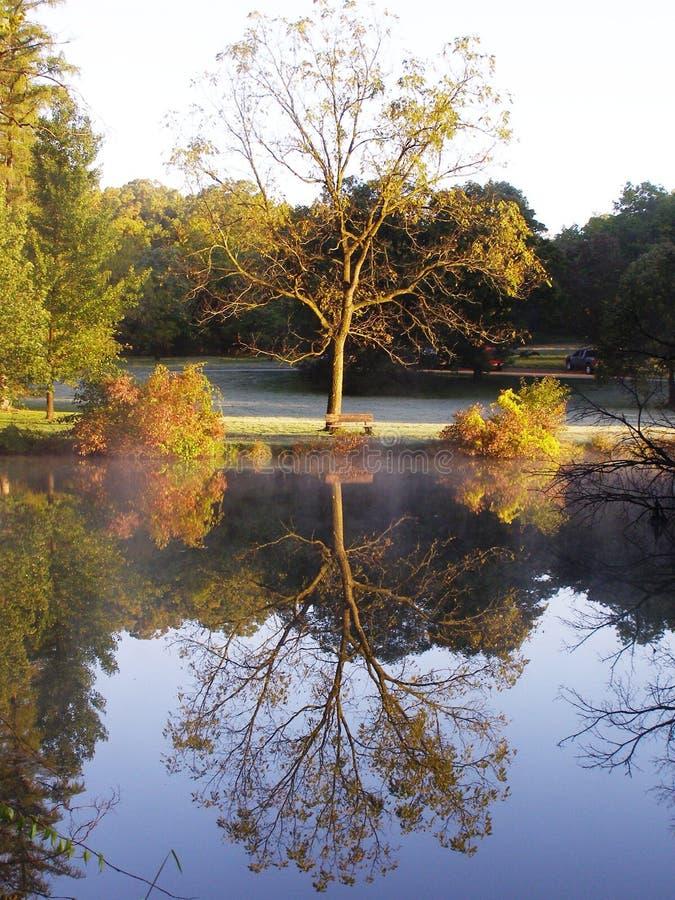 Reflected Tree stock photography