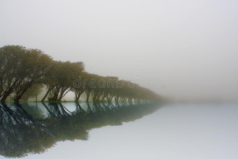 Download Reflected tree line stock photo. Image of misty, outdoor - 11543720