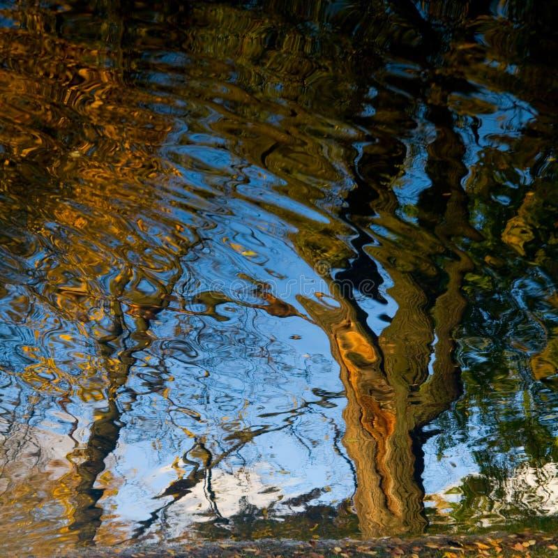 Reflected trees royalty free stock photos