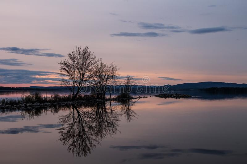 Reflected trees stock photography