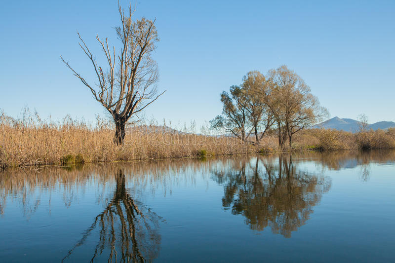 Reflected in water. Trees and sky reflected in the water stock image